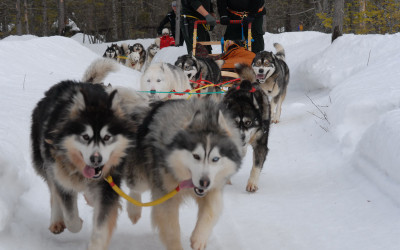 expedition-wolf-equipe-chien
