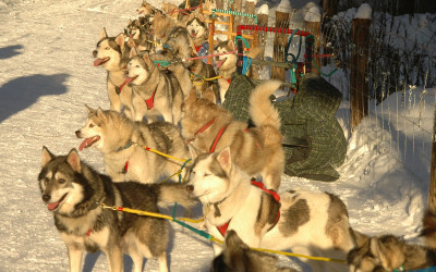 expedition-wolf-groupe-de-chiens