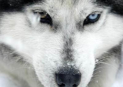 expedition-wolf-kazabazoua-mere