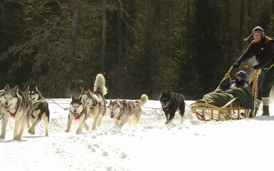 expedition-wolf-traineau-beaudin